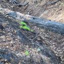 Schade door bosbranden nog niet te overzien