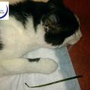 Brakende kat Rinus