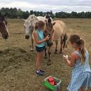 Paarden knuffelen en tevens snuffelen