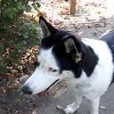 Hond gevonden en terug bij de eigenaar