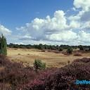 Landschap Overijssel start met natuurherstel Lemelerberg