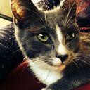 Kat kwijt omgeving Oudleusen