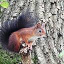 Dankzij uw gift, leven deze eekhoorns