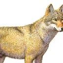 Ook wolf gespot, maar al op 6 oktober