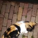 Iemand deze kat kwijt? Opgelost