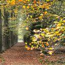 Een herfstfoto