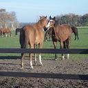 Paarden knuffelen en tevens snuffelen, nog 1 keer dit jaar