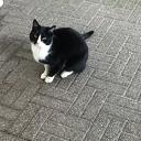 Kat gevonden in Hoonhorst