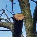 Nuttenboom giet der echt niet dood an