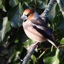 Vogels genieten van het bijvoederen