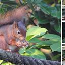 Nieuwe beelden dieren tuin