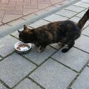 Kitten gevonden