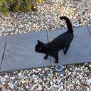 Kat aan komen lopen