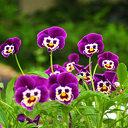 Scouting Dalfsen bezorgt bloemetje aan huis voor moederdag