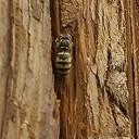 Eerste bezoeker Damito: een bije of beje