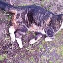 Dode kat