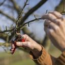 Cursus vormsnoei voor jonge bomen