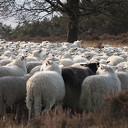 Landschap Overijssel zoekt inhuur-herder