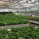 Plantjesmarkt de Ambelt Zwolle