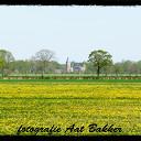 Het voorjaar kleurt geel