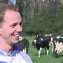 Koeien dansend de wei in bij Maurits von Martels