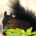 De eekhoorns van Oudlusen