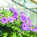 Bloemenverkoop Quodlibet Vilsteren