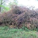 Rododendron heeft slecht jaar achter rug