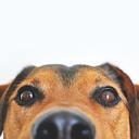 Hondenbench