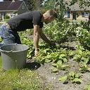 Onderhoud plantsoen bij De Spil