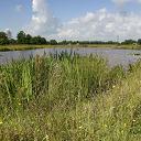Natuurgebieden in Nieuwleusen
