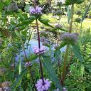 Open tuindagen groei en bloei
