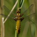 Op zoek naar insecten met IVN Zwolle
