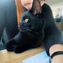 Zwarte kat vermist