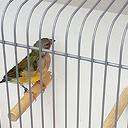 Vogel gevonden op de Gerner Marke