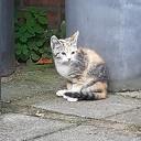 Kitten aan komen lopen