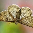 Vlinder mist een stukje