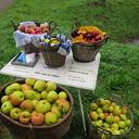 Heerlijke appels voor weinig geld