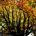 De herfstkleuren zijn er weer
