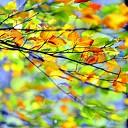 Fotograaf duikt de bladeren in