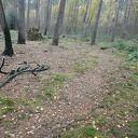 Schade laatste bosbrand steeds minder zichtbaar