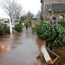 De kerstboommannen flink aan de slag