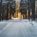 Beleef 2e Kerstdag in het Sterrenbos