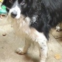 Hond aangetroffen en weer thuis