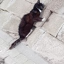 Dode kat gezien