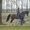 Heerlijk met paard en Pa op pad