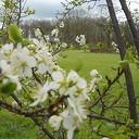 De lente komt er aan