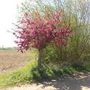 Prachtige bloeiende bomen