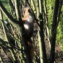 Jonge eekhoorntjes (deel 2)