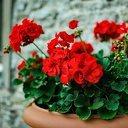 Niet vergeten: Wie verras jij met een bloemetje namens Scouting Dalfsen?